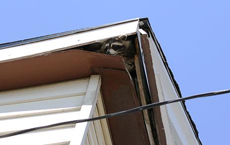 animal damage repair