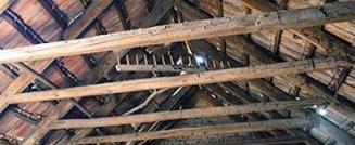 Bat Pest Control – Not Your Typical Extermination