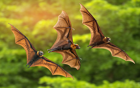bat removal services in dallas & houston