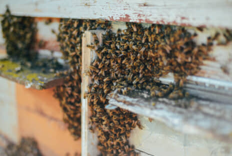bee removal services in dallas & houston, tx