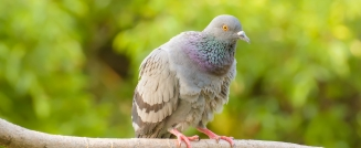 Pests With Nests: Why You Need Bird Control Services