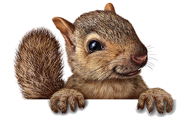 Dallas Amp Houston Best Squirrel Removal Services Trapping Usa