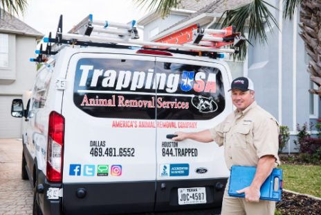 trapping usa animal removal service