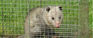 Animal Removal vs Pest Control